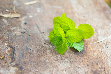 peppermint on wooden background