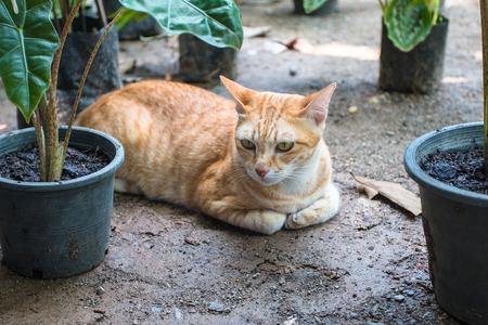 Cat hidden in plant