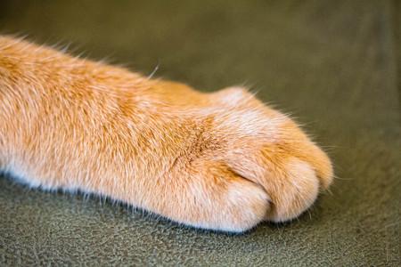 yellow soft Cat foot