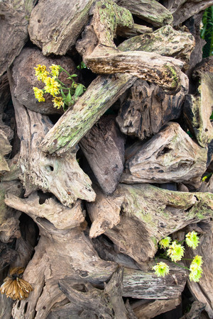 old dead tree trunk background Stock Photo