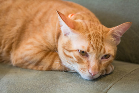 Yellow cat in action sad or lonely o n comford sofa Stock Photo