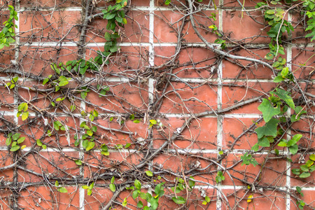 red Brick and ivy background
