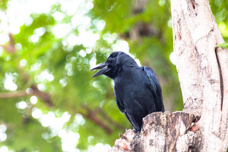 Crow on tree with green bokeh background Stock Photo