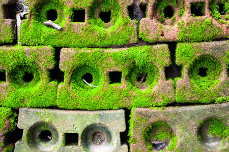 Green Moss on red brick