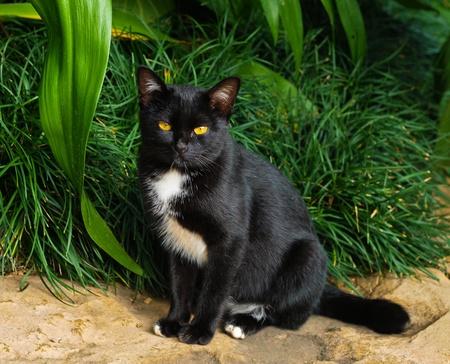 Black Cat,in Thailand