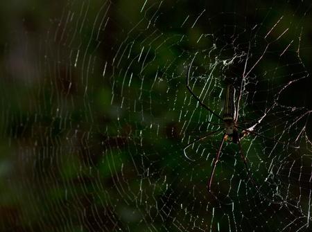 spider,In Thailand