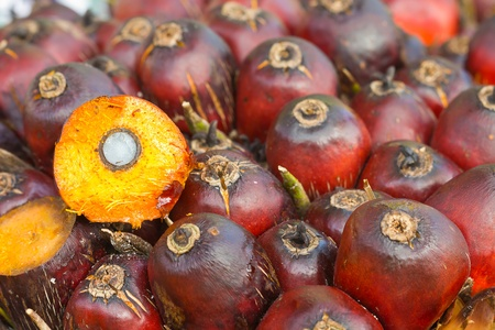 Oil Palm: palm oil seed Stock Photo