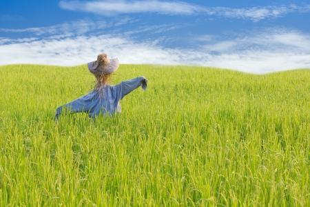 espantapájaros en campo de arroz con el cielo azul