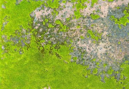 Natural moss texture on old  background and texture