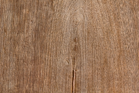 wooden texture of a tree photo