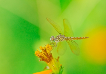 close up dragonfly on top flower on green background Stock Photo