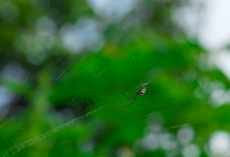 macro of small spider on web with green background