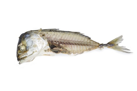 Mould on old fish with white background photo