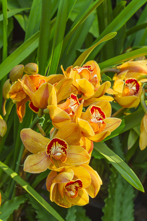 cybidium orchid flower still on tree photo
