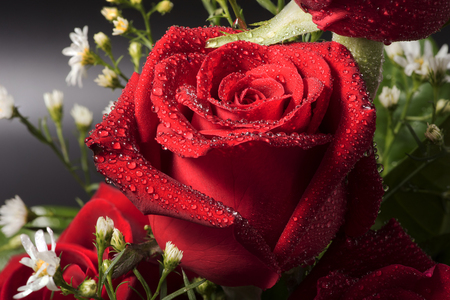 Closed up bouquet red rose with dropslets on petal surface Stock Photo