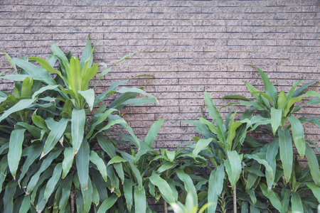 The greenery leaf at the toilet with old bricked background Stock Photo
