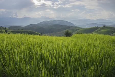 Greenery rice terraced field at Baan Pa Bong Piang village in Chiangmai,Thailand Stock Photo
