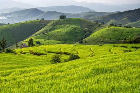 Greenery rice terraced field at Baan Pa Bong Piang village in Chiangmai:,Thailand