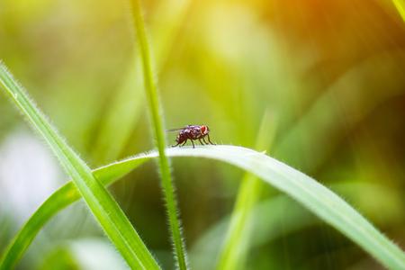 Flies on green grass