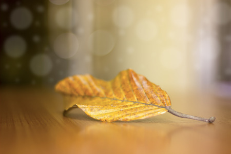 Dry leaves are brown on the wooden table with space for writing text, just business opportunity.