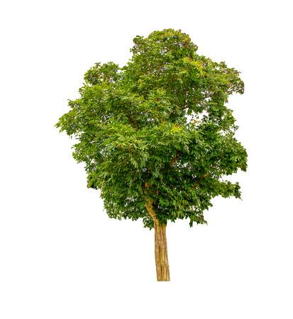 Tree on white background Stock Photo