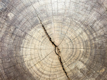 Old wood texture natural pattern