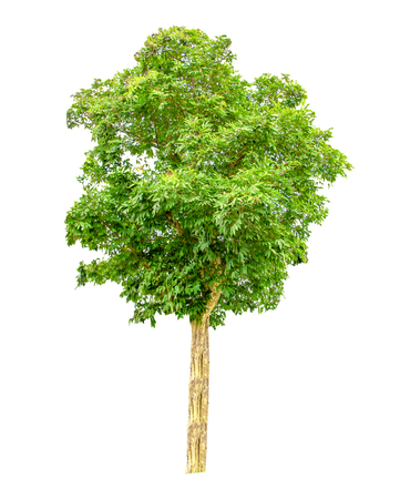 Tree on white background,clipping paths.