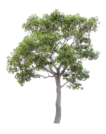 Collection of isolated trees on a white background. Beautiful tree It is suitable for use in decorating, decorating, and printing Banco de Imagens