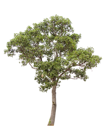 Collection of isolated trees on a white background. Beautiful tree It is suitable for use in decorating, decorating, and printing Banco de Imagens - 125053676