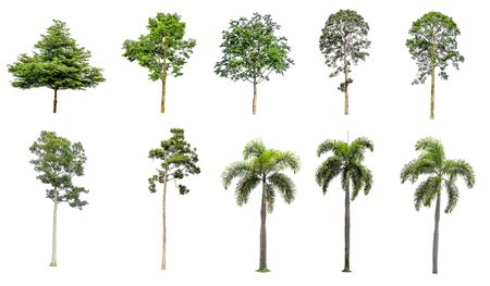 Ten tree branches on a separate white background