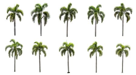 Ten palm tree collections isolated on a white background.