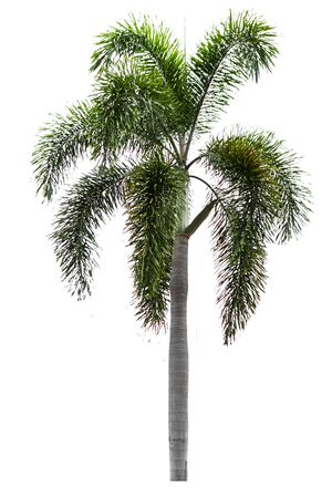 Palm trees isolated on a separate white background.
