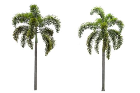 palm tree collections on a white background. Stok Fotoğraf