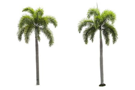 palm tree collections isolated on a white background. Stok Fotoğraf