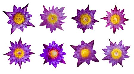 A collection of eight purple lotus flowers on a white background.