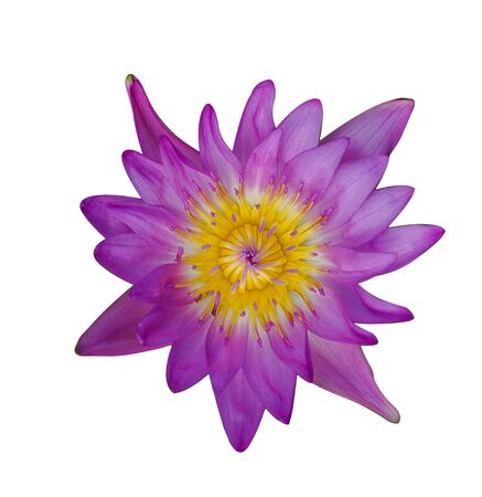 Purple lotus on a white background. Imagens