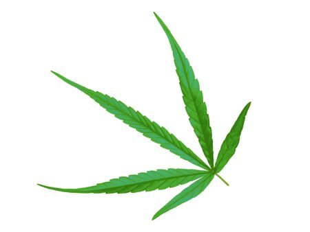 Marijuana leaves on a white background. Banco de Imagens