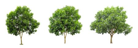 Three tree collections on a white background.