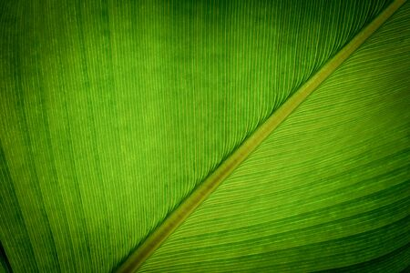 green leaf pattern texture background.