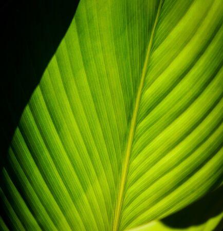 緑の葉のパターンテクスチャの背景。