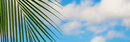 Banner size, Coconut trees and the sky on a summer vacation. Stockfoto