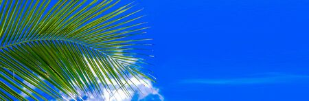 Banner size, Coconut trees and the sky on a summer vacation