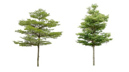 Collection of isolated trees on a white background. Beautiful tree It is suitable for use in decorating, decorating, and printing.