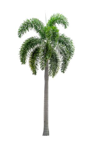 Palm trees on a separate white background