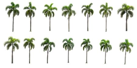 Fourteen collection Palm trees on a separate white background