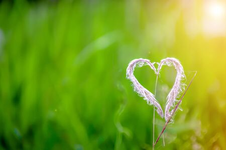 Blur background, Heart shaped grass flower with green meadow in the background