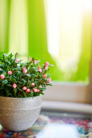 Pink flowers and green foliage shrubs in a small pot with a green natural background. The concept is a smartphone background or website or other background.