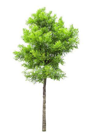 Raccolta di alberi isolati su sfondo bianco. Bellissimo albero È adatto per l'uso nella decorazione, decorazione e stampa. Archivio Fotografico