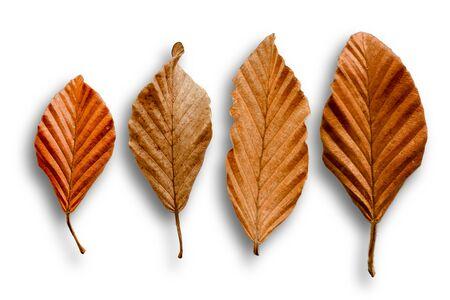 Four dry leaves on a white background Zdjęcie Seryjne