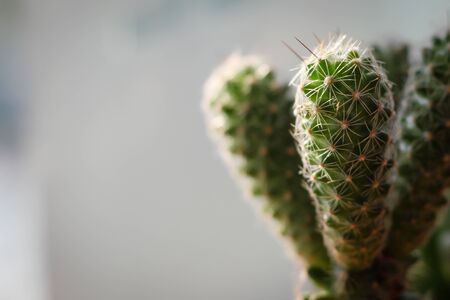 Cactus shoot closely and have space